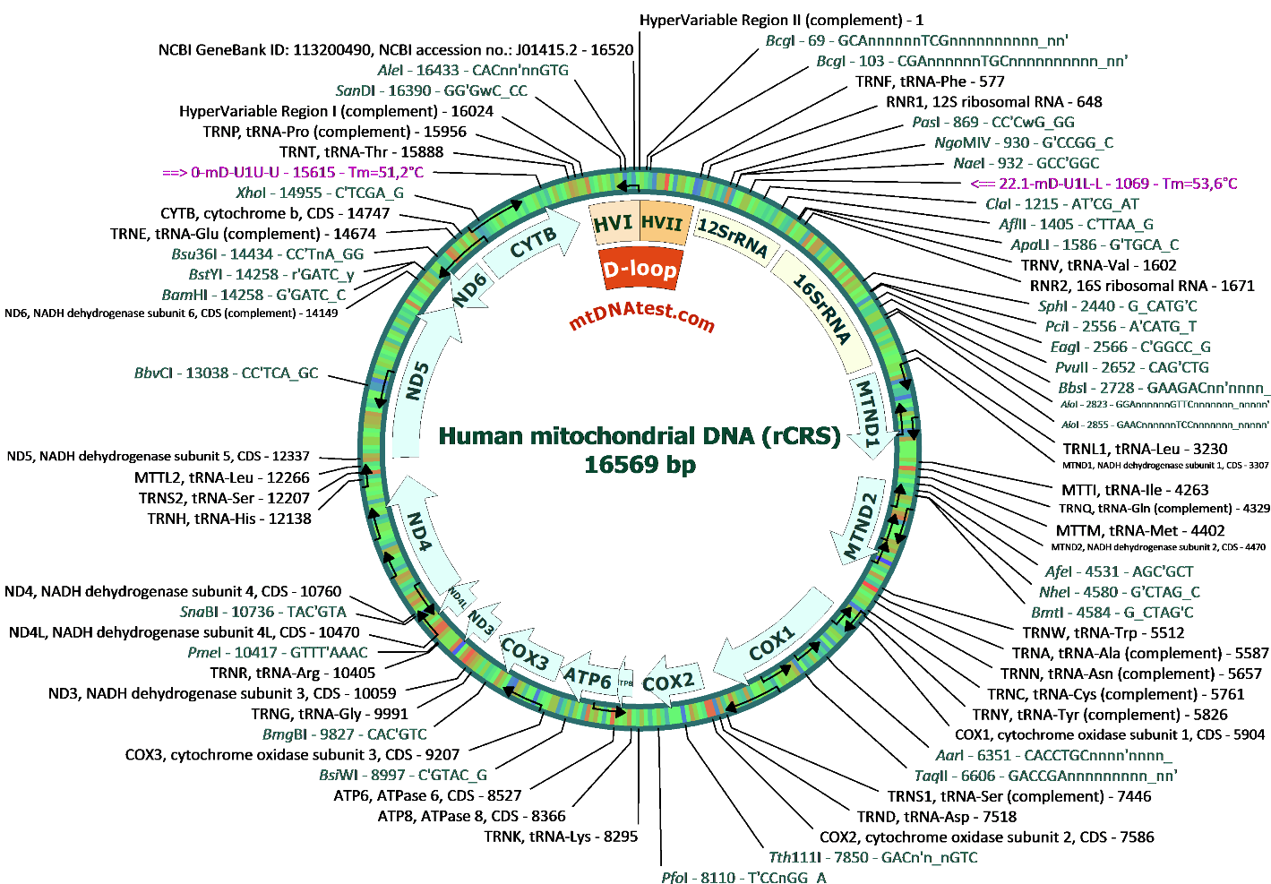 Tracing mitochondrial dna